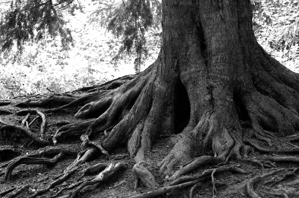 tree_roots1